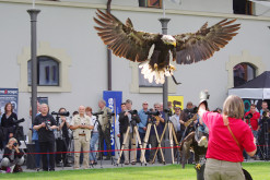 Fürstenfeld Progr_Flugshow-1