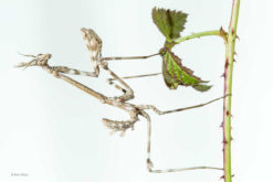 marc-albiac-_-wildlife-photographer-of-the-year