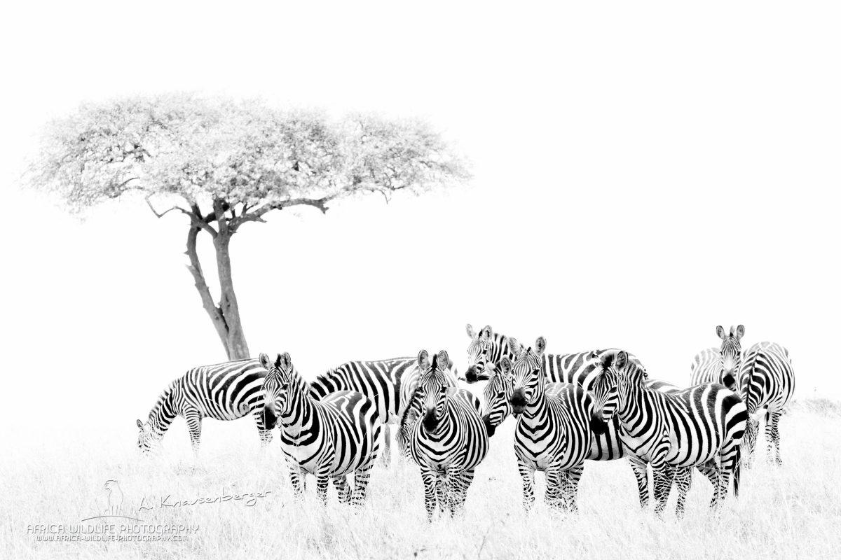 Wildlife Safari 2019